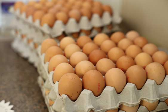 fresh farm eggs from Sydney wholesale and retails